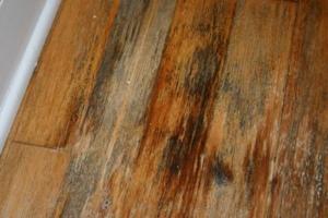 mold damaged floor