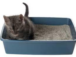 pet sitter box
