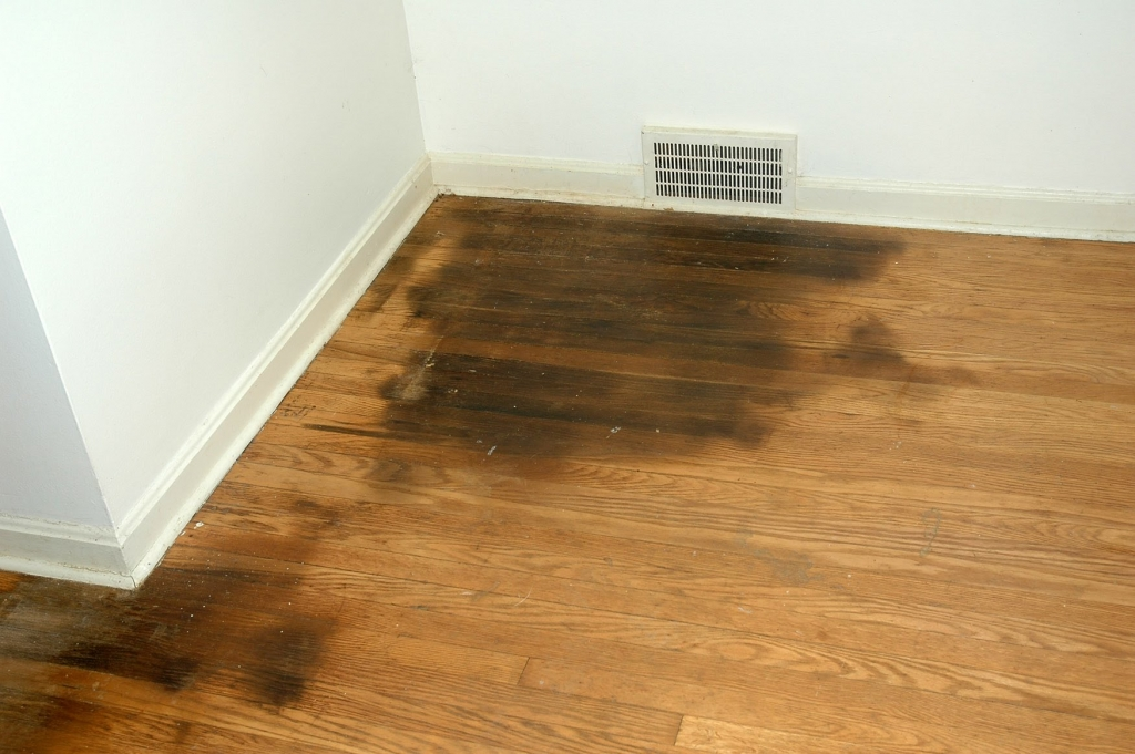 remove urine from hardwood floors