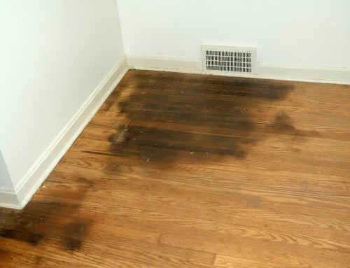 How To Remove Urine From Hardwood Floors?